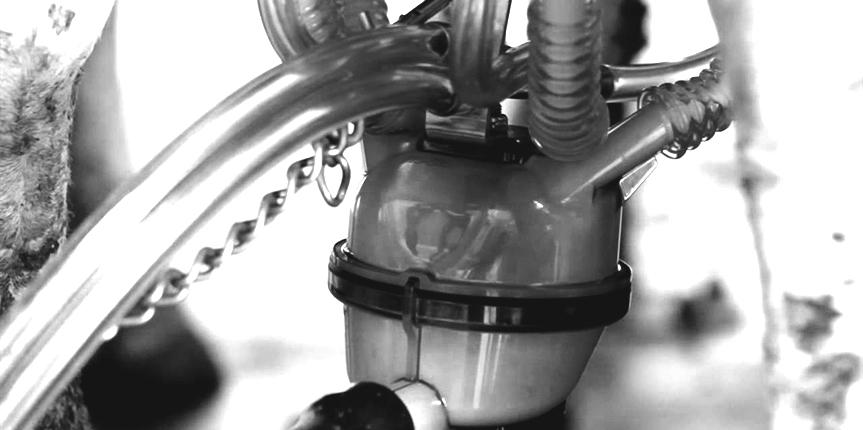 Curatare si igienizare aparatelor de muls